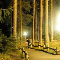 Whinfell Forest