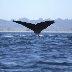 Monterey Bay Whale Watching Cruises