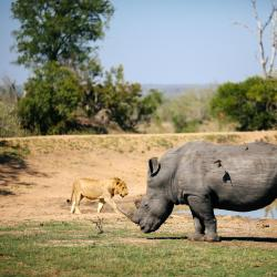 Rhino & Lion Nature Reserve