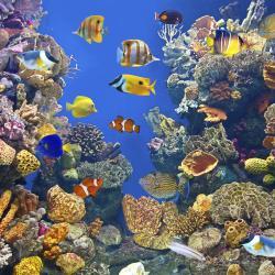Samui Aquarium