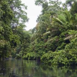 פארק לאומי טורטוגרו, טורטוגוארו