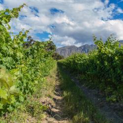 Cape Point Vineyards Estate