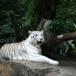 Vườn thú đêm Night Safari