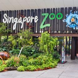 živalski vrt Singapore Zoo