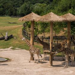 a Prágai Állatkert
