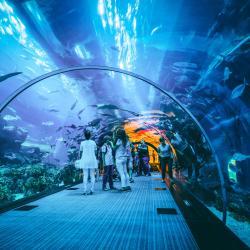 Dubaijas akvārijs un zemūdens zooloģiskais dārzs