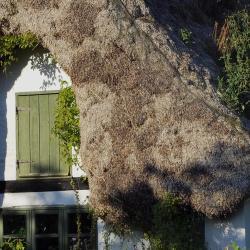 Læsø 31 villas