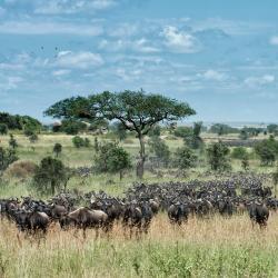 Serengeti 18 luxury tents