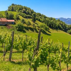 Styrian Wine Road 3 luxury hotels