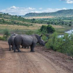 Pilanesberg National Park 5 guest houses