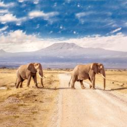 Amboseli National Park  10 hotels with pools