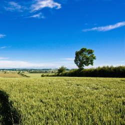 بيدفوردشير