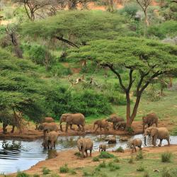 Samburu National Reserve 4 luxury tents