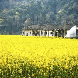 Jiangxi 6 farm stays