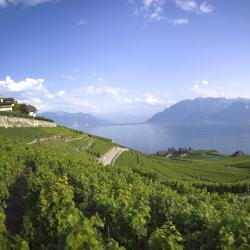Lake Geneva 176 accessible hotels