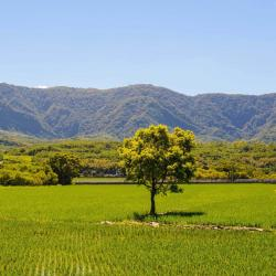 Taitung County 3 farm stays