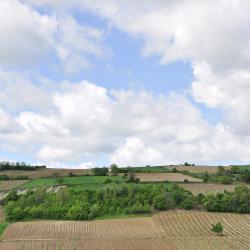 Vojvodina 140 homestays