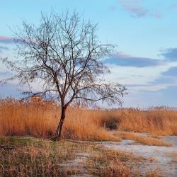 Mykolayiv Region 7 homestays