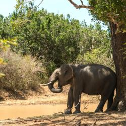 Yala National Park 65 homestays