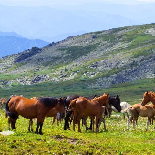 Paseos a caballo entre las colinas