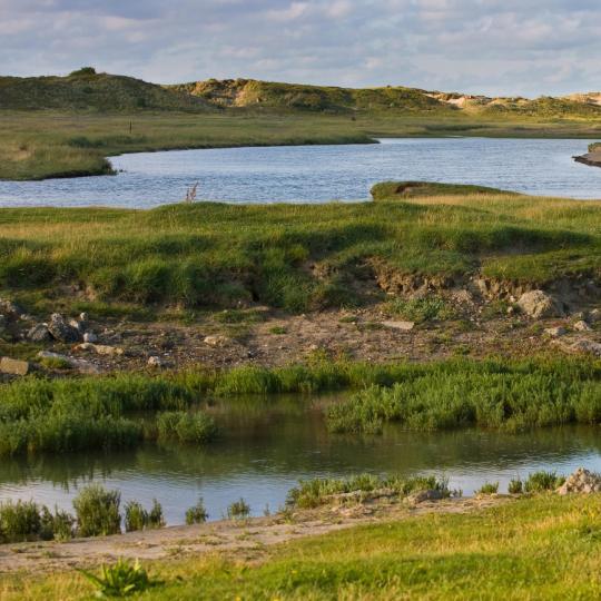 Prírodná rezervácia Zwin