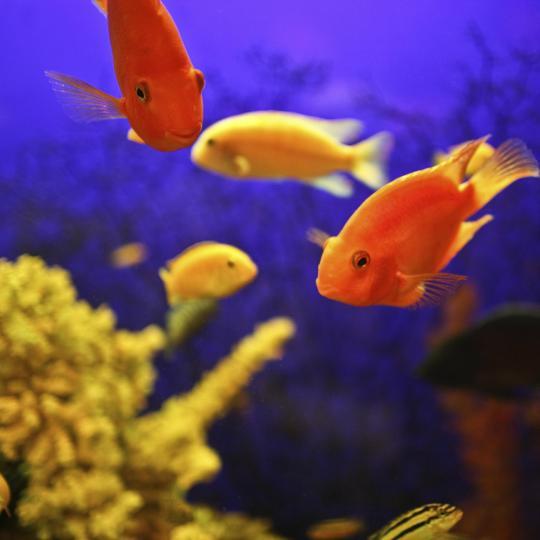 Océanopolis, l'aquarium et parc de loisirs de Brest