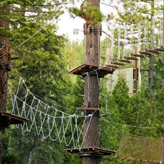 Go Ape Whinlatter Forest Park