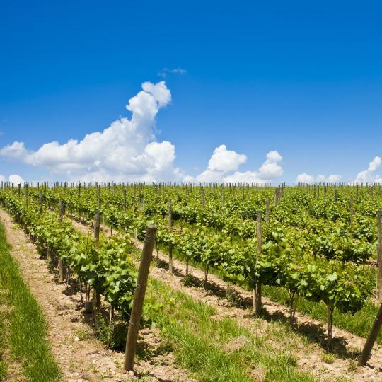 Dégustation de vin et de cava dans la région de Penedès