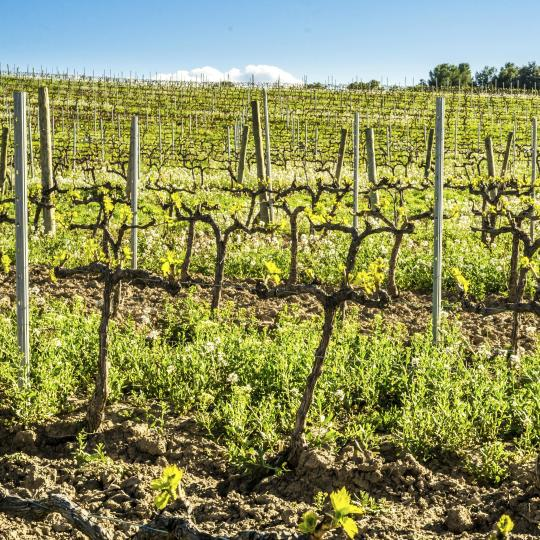 Wine and oil routes in the Priorat region