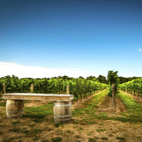 Desfrute de Niagara Wine Country