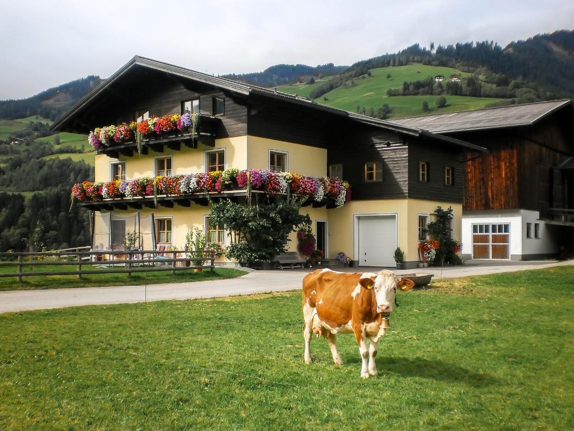 Rieserhof/Fam. Meißnitzer a Pongau, Austria