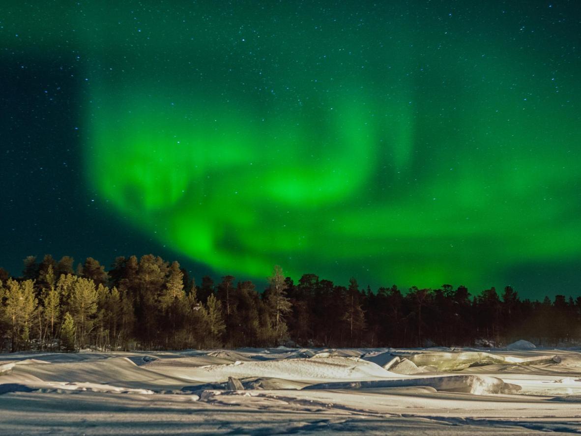 See reindeer in Inari, Finland
