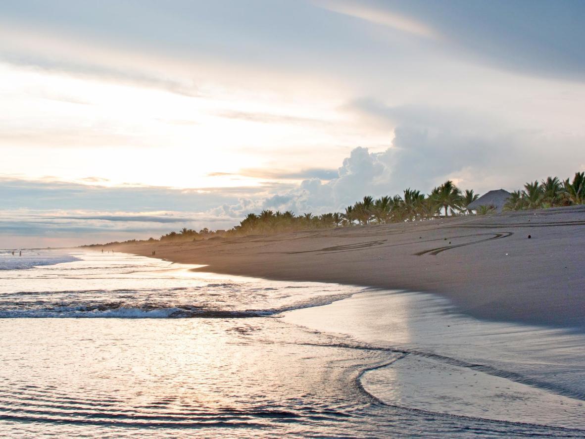 Menyaksikan anak penyu berlari ke laut di pantai Monterrico