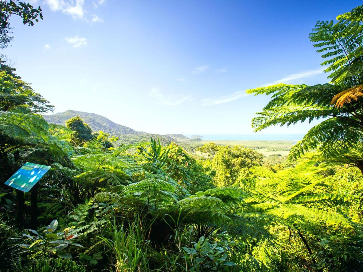 The Daintree Rainforest near Cape Tribulation is 135 million years old