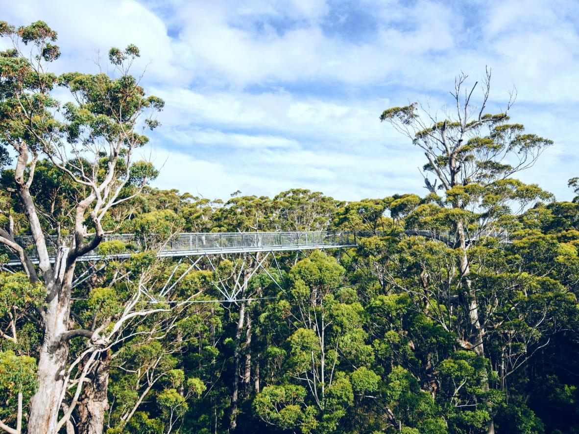 See the forest canopy via the sky-high walkways