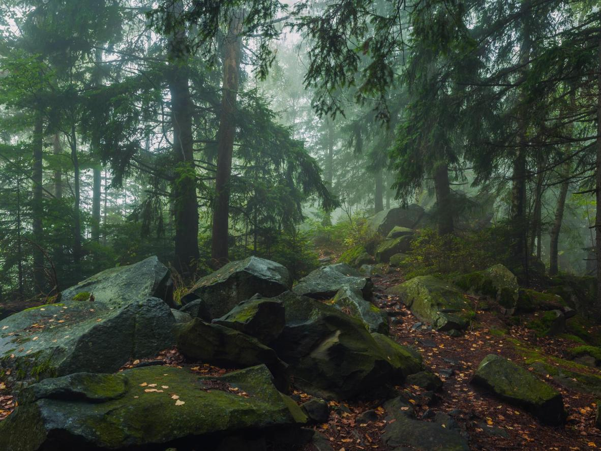 Parts of this primeval forest have remained undisturbed by humans since the ice age