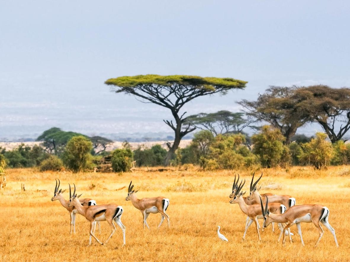 January is a great time to spot gazelles and other wildlife in Kenya