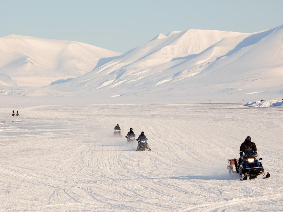 Snowmobile and dog sled past polar bears and arctic foxes in Longyearbyen