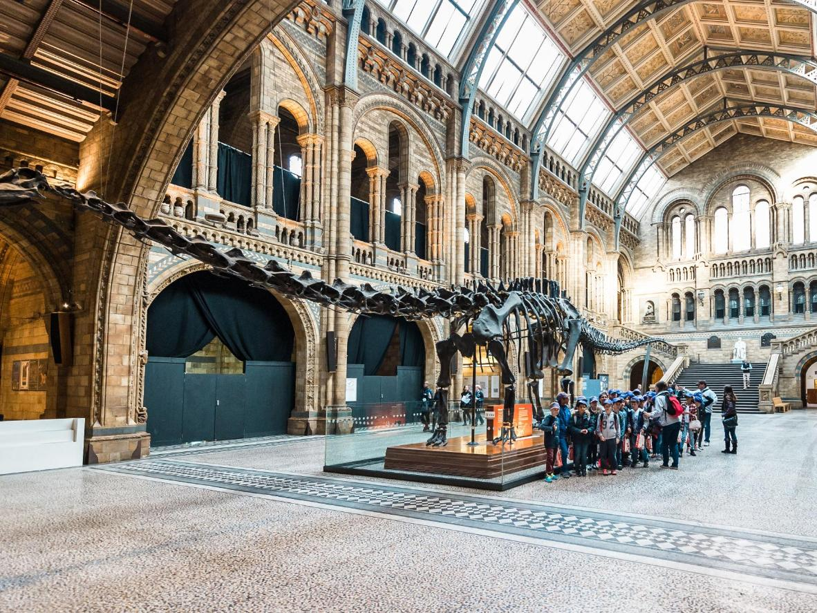 Kensington and Chelsea is home to the enormous dinosaur skeletons of the Natural History Museum