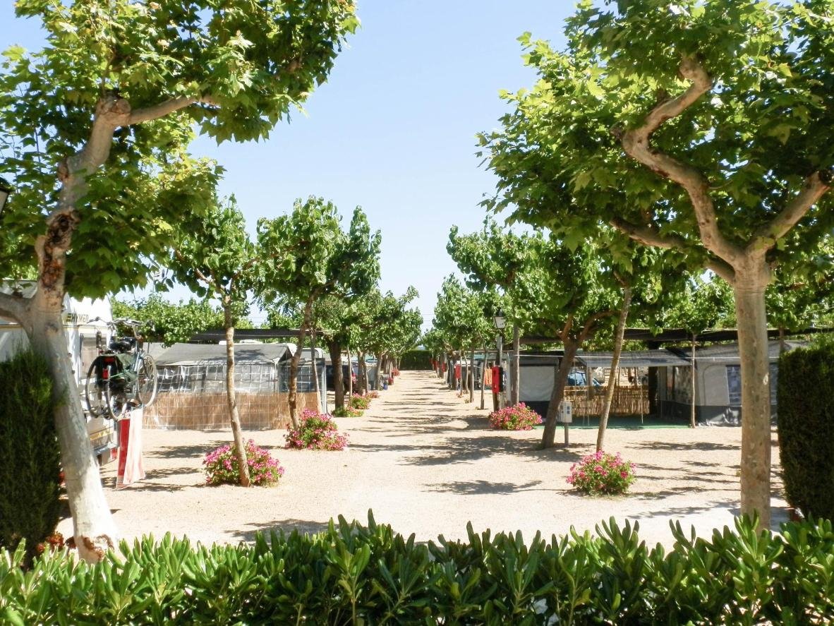 Các caravan di động được sắp ngăn nắp trên con đường điểm cây xanh và rặng hoa tại Camping Clará
