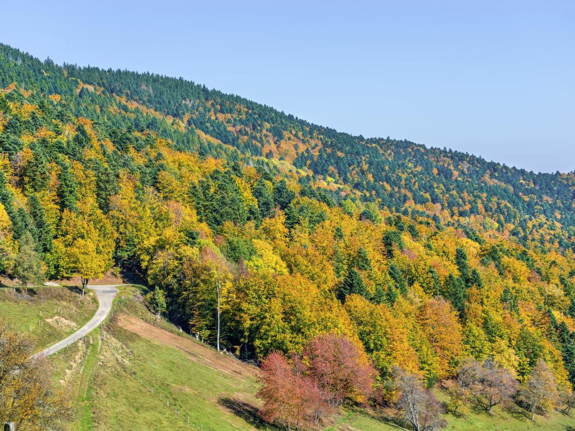 Située en Alsace, Orbey est connue pour ses collines, ses vignes et ses vallées.