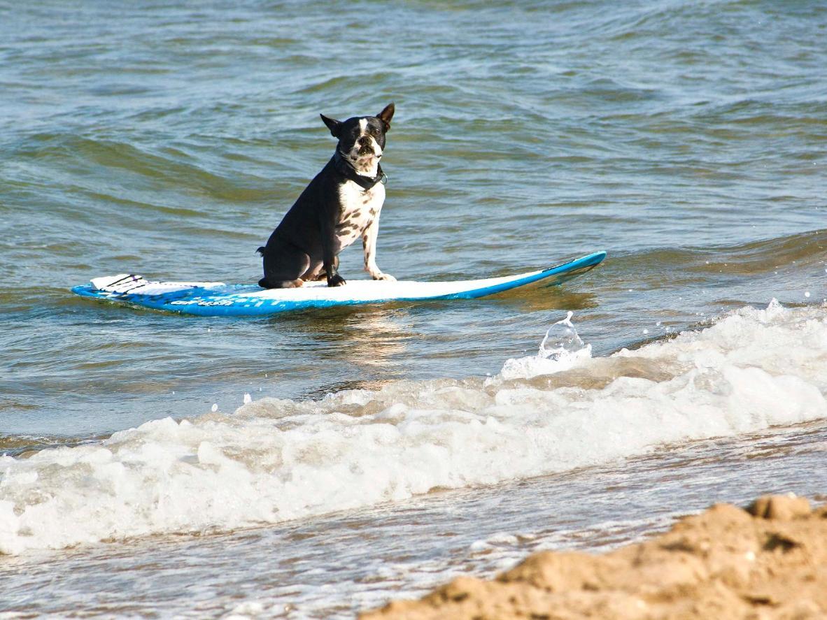 Make the most of the wild Galician coast walking the dog beach at Punta Corveira