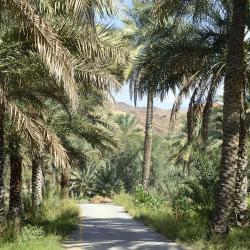 Al Ḩamrā'
