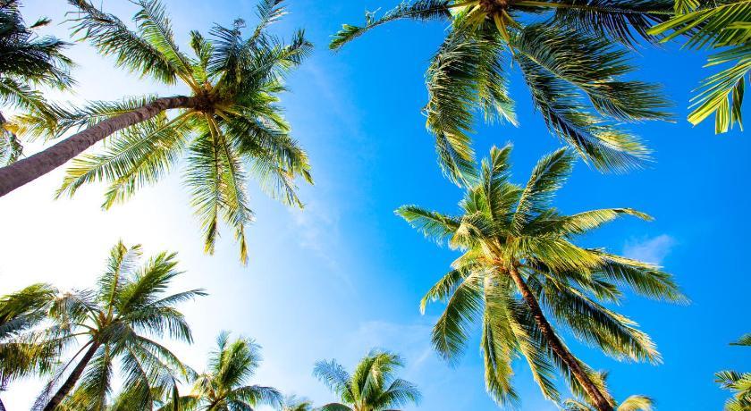 Coconut Village Resort Phuket(普吉岛椰子乡村度假酒店)