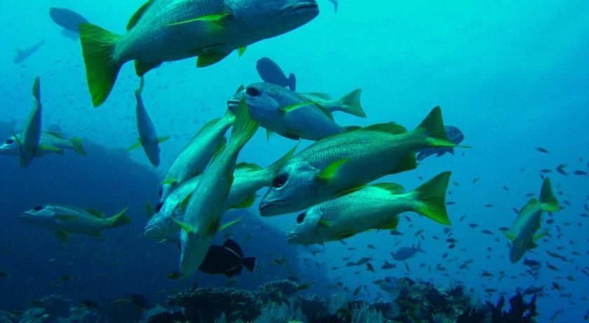 壁纸 海底 海底世界 海洋馆 水族馆 桌面 840_460