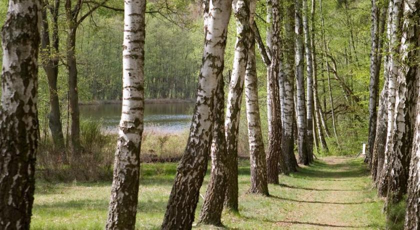 加拿桦树林大风景ppt