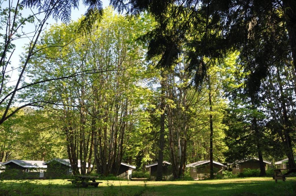 A garden outside Sunwolf Riverside Cabins