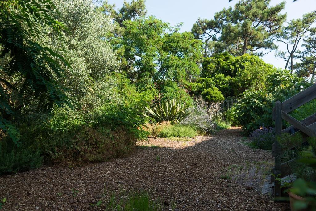A garden outside Le Lodge du Cap Ferret