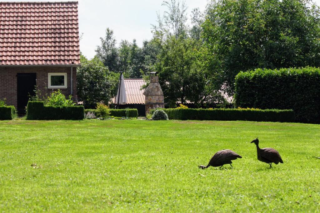 Een tuin van B&B Ruurlo Belle Rose