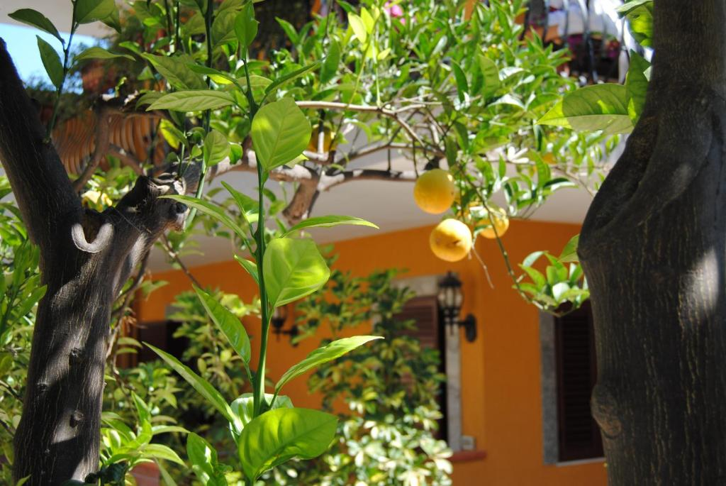 Residence Villa Il Glicine